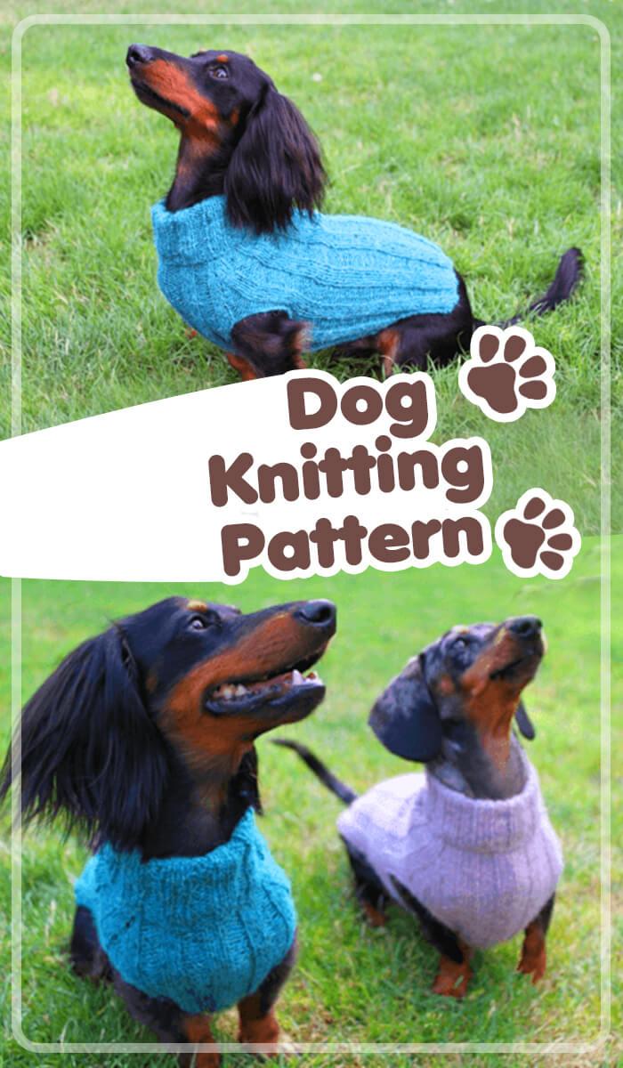 Dog Sweated Knitting Pattern