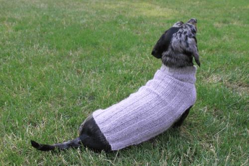 dog jumper knitting pattern