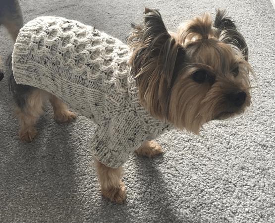 Tweed Dog Sweater Knitting Pattern by DottyPatterns