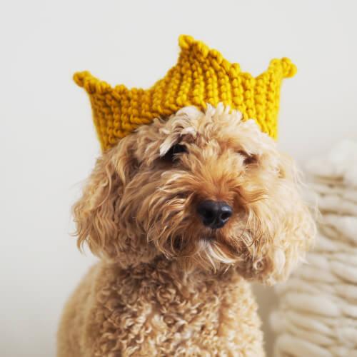 Free Knit Crown Pattern by Lauren Aston Designs