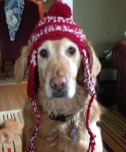 Dog Earflap Hat Knitting Pattern by DogKnittingPatterns